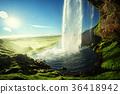 Seljalandfoss waterfall in summer time, Iceland 36418942