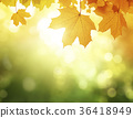 leaves in autumn forest 36418949