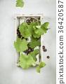 Fresh grape 36420587
