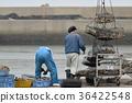 굴 선별하여 蓄養 바구니에 넣는 작업 풍경 坂越 어항 36422548