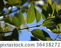 blank expression, leaf, lauraceae 36438272