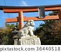 Torii Gate, torii, red 36440518