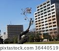 cherry blossom, cherry tree, fake buyer 36440519