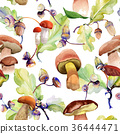 Forest acorn pattern in a hand drawn watercolor 36444471