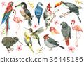 热带 鸟儿 鸟 36445186