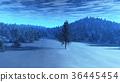 winter, pine, forest 36445454