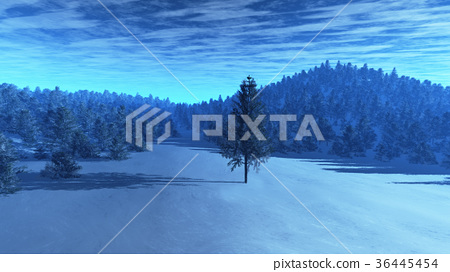 Winter Scene with Pine Forest 36445454