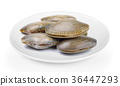Surf clamplate on white background 36447293