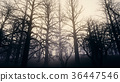 Dead Forest Misty Woods 36447546