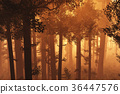 Wonderful Deep Forest 3in the Sunset Sunrise 36447576