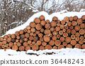 冬天景色 积雪 采伐的木材 36448243