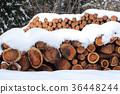 冬天景色 积雪 采伐的木材 36448244