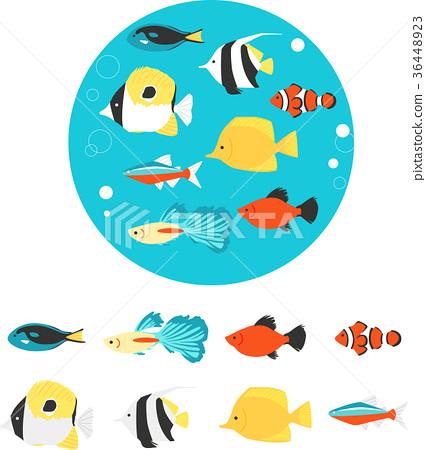 ปลาเขตร้อน,ปลา,ปลาการ์ตูน 36448923