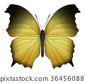 Beautiful butterfly isolated on a white background 36456088