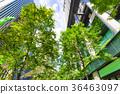 辦公區和綠色的高層建築 36463097