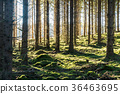 Bright mossy forest 36463695