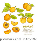 apricot, nature, sweet 36465192