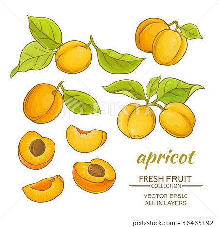 apricot vector set 36465192