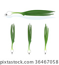 Green onion on a white background 36467058