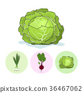 Icons green onion,beet,cabbage 36467062