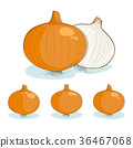 Onion on a white background 36467068