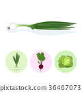 Icons green onion,beet,cabbage 36467073