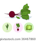 Icons green onion,beet,cabbage 36467860