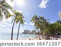 리조트, 하와이, 바다 36471307