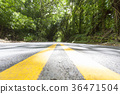 road, wood, forest 36471504