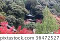 Eikando Temple at radiance of autumn colors.  36472527