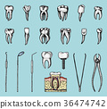 molar teeth enamel, dental set. instruments 36474742