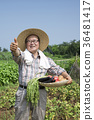 diligent farmer's life, green rice plants background 082 36481417