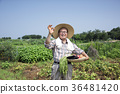 diligent farmer's life, green rice plants background 083 36481420
