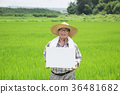 diligent farmer's life, green rice plants background 263 36481682