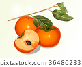 Fruit objects - Apple, tomato, chestnut, etc 004 36486233