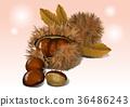 Fruit objects - Apple, tomato, chestnut, etc 008 36486243