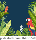 Tropical plant vector design 005 36486249