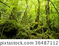 forest, fresh verdure, tender green 36487112