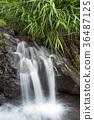 spring water, water, spring 36487125