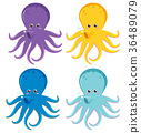 Octopus in four different colors 36489079