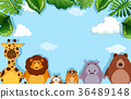 Background template with wild animals 36489148