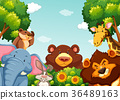 Wild animals in the forest 36489163