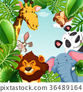 Wild animals and leaves around the border 36489164