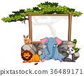 animal cute design 36489171