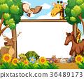 wildlife, animal, nature 36489173