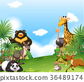 Background scene with wild animals in the field 36489174