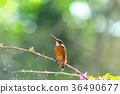 작은 새, 미야코지마, 조류 36490677