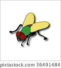 Cartoon fly, insect with bright colors. Housefly 36491484