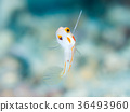 바다속, 수중, 물고기 36493960