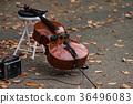 cello, violoncello, fallen 36496083